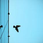 Oiseaux et vitrages – un problème sous-estimé
