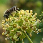 Favorisez les abeilles sauvages dans votre jardin