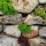 Atelier: Construire un mur de pierres sèches