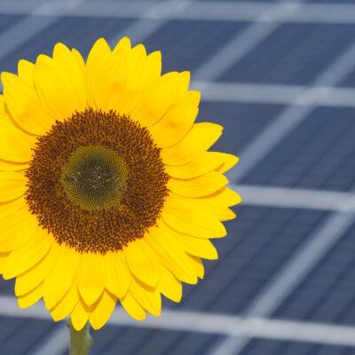 Ne pas bousiller la transition énergétique par des taxes discutables
